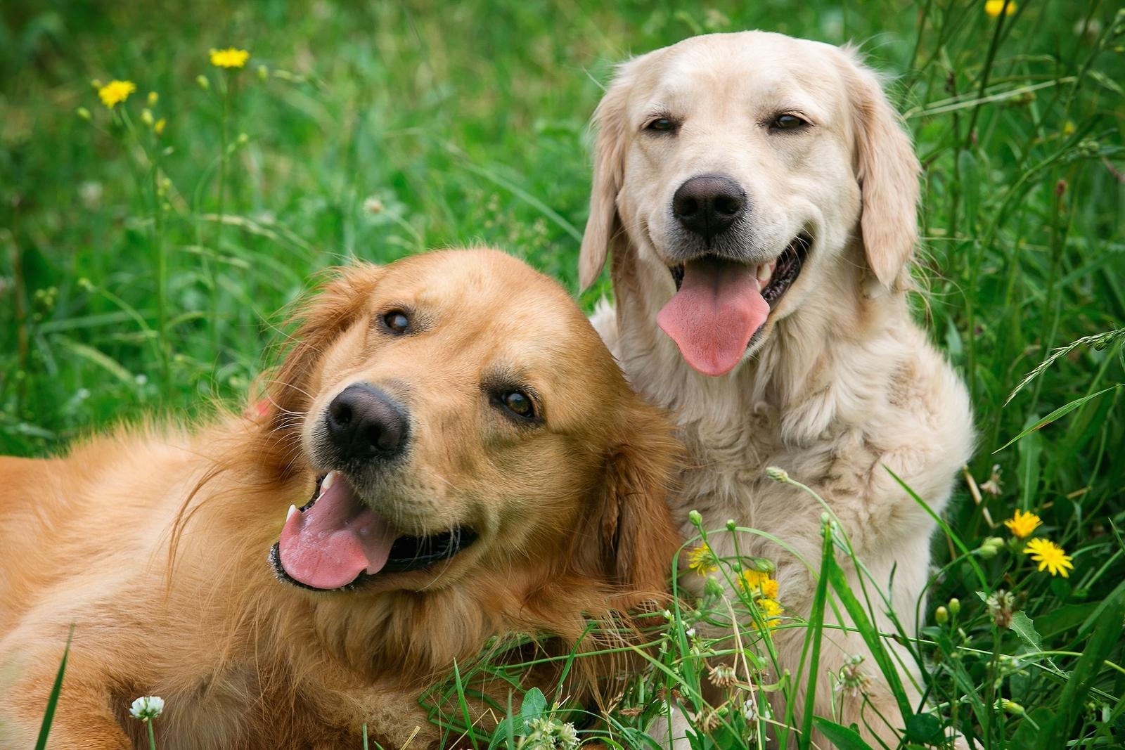 Historia mi primera mudanza blog de mudanzas df y - Jardin para perros ...