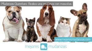 Mudanza con mascotas Queretaro